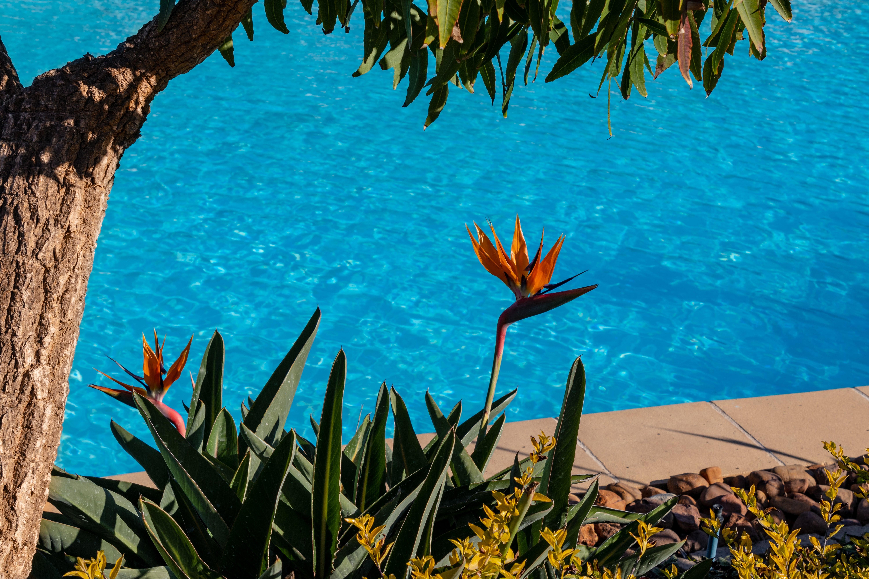 Préparer sa piscine pour l'été
